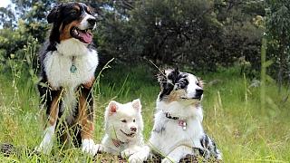 8 oblíbených psích plemen aneb 4 důvody, proč mít psa