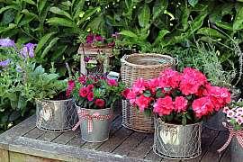 Osazování balkonových nádob a boj proti lalokonoscům