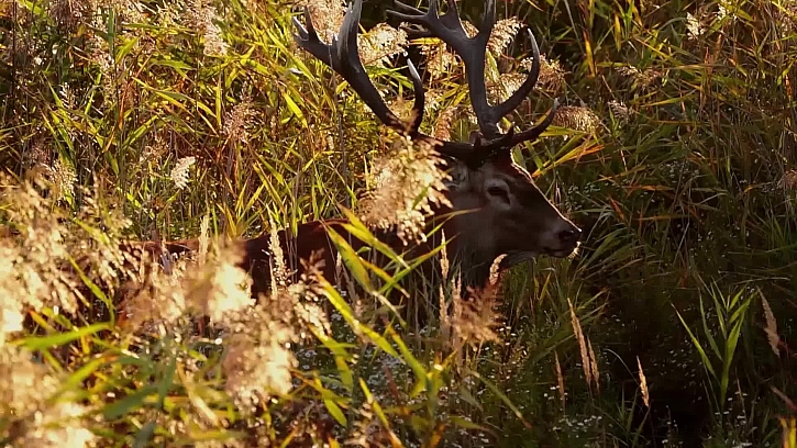 Návštěva obory - chov jelenů