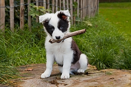 Co by měl váš pes umět aneb Bez výcviku to nepůjde 2. díl