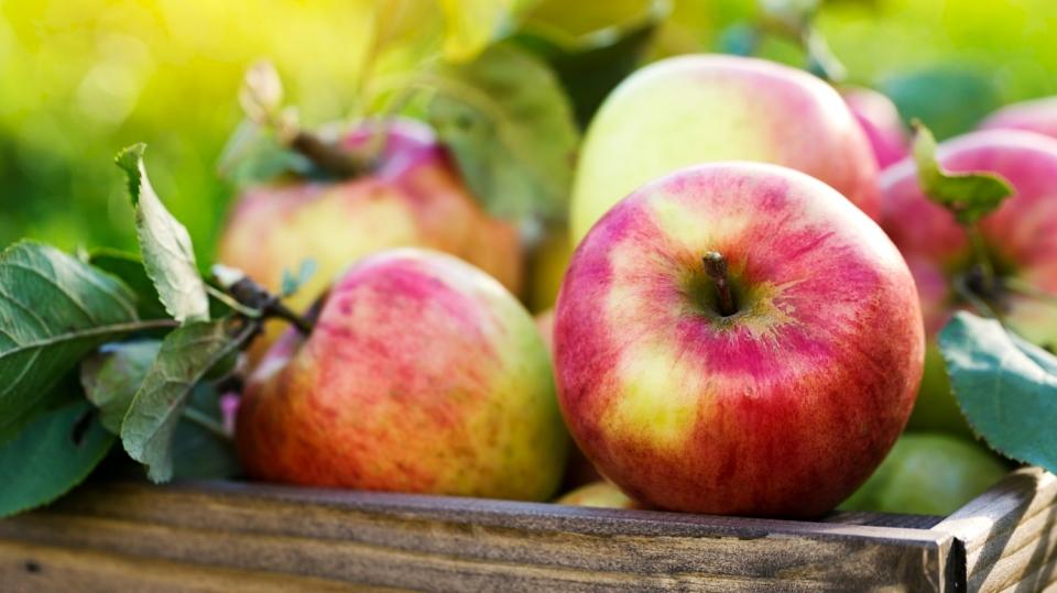 5 tipů, jak uchovat jablka přes zimu: Buďte lepší ve skladování jablek