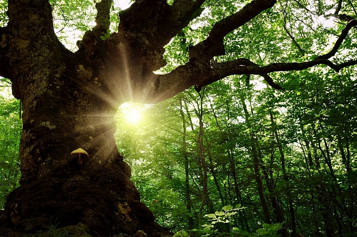 Kácení vzácných a starých stromů má svá specifika