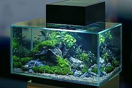 Akvarijní rybky, které mohou chovat i děti