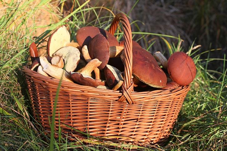 Košík s houbami bude základem pro houbové delikatesy (Zdroj: Depositphotos)