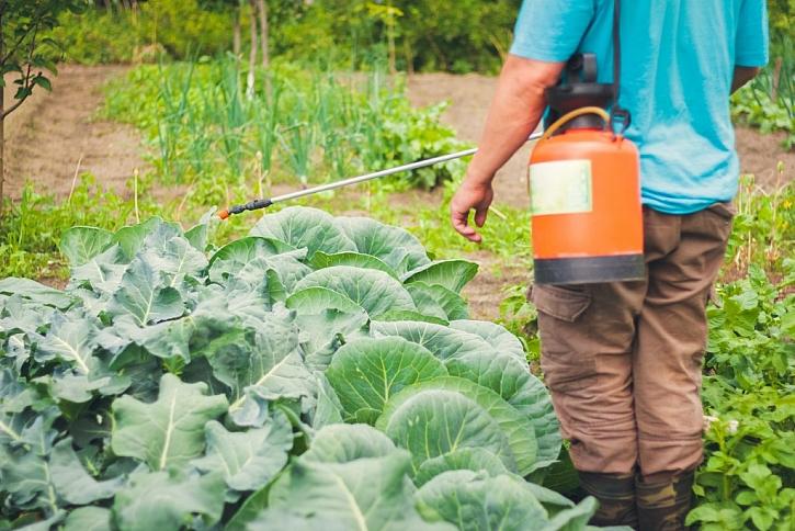 Bez postřiku se plísní na zelenině nezbavíte