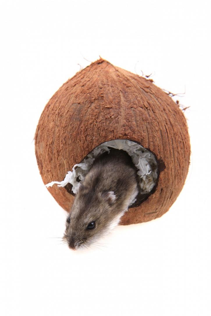 Kokosový domeček