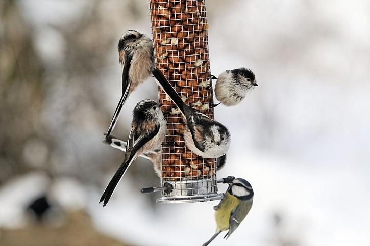 Při přikrmování ptáků v zimě používejte kvalitní krmivo (Zdroj: Depositphotos)