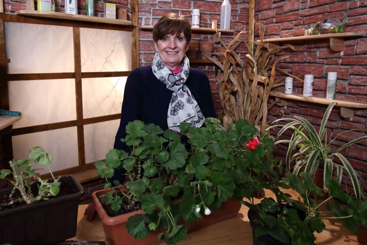 Jak připravit zazimované balkónové květiny na novou sezónu