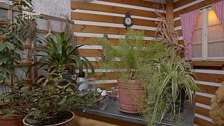 Škůdci pokojových rostlin nejsou nezničitelní