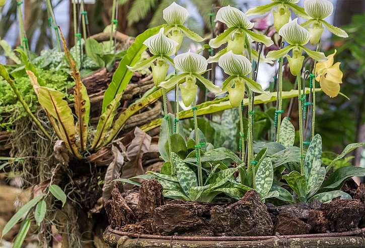 Orchidej zasaďte do bohaté organické půdy