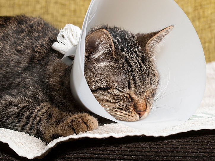 Kočka po operaci