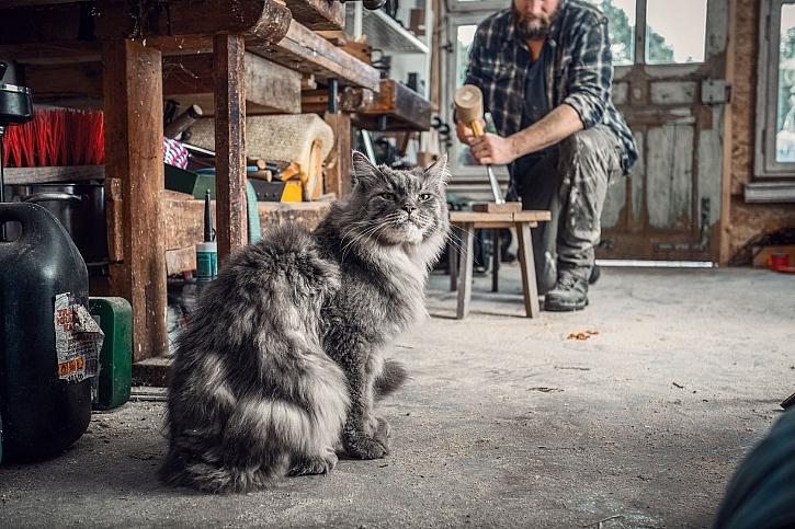 Hornbach_kocici pomocnik v dilne