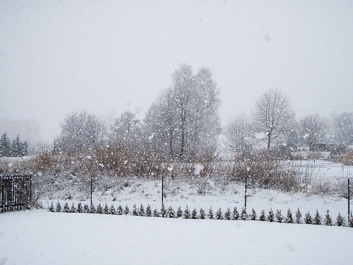 Zima na zahradě
