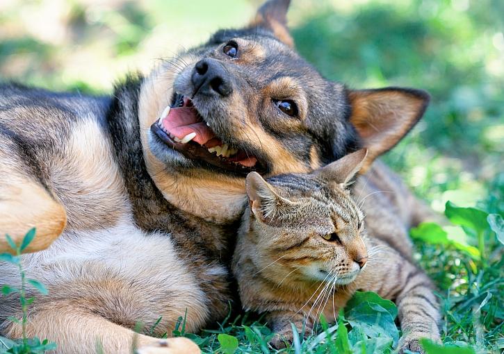 Šťastný pes, kočka