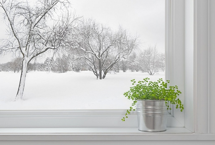 Ochrana stromů a keřů před zimou