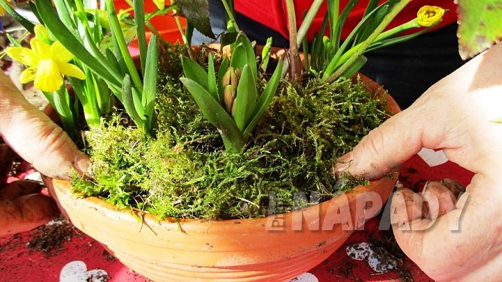 Jarní minizahrádka: zeminu pokryjte mechem
