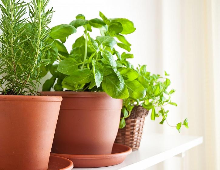 Bylinky v domácnosti jsou vždycky užitečné a jsou vhodné pro všechny (Zdroj: Depositphotos)