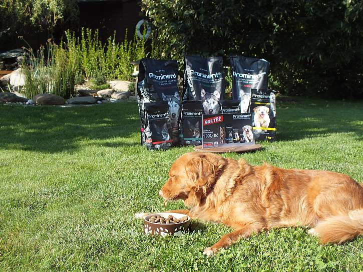 Soutěž z Receptáře: Vyhrajte 3 poukazy na krmivo PROMINENT pro psy a kočky