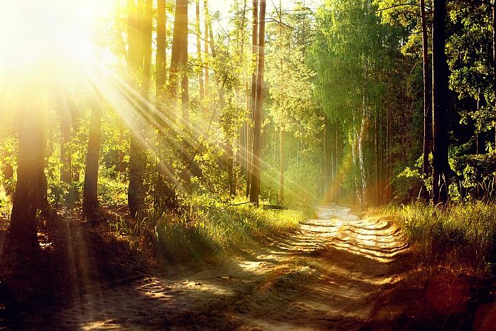 Kavárny a nákupní centra jsme vyměnili za lesy a turistické stezky (Zdroj: Depositphotos)