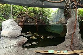 Paludárium: Terárium a akvárium v jednom