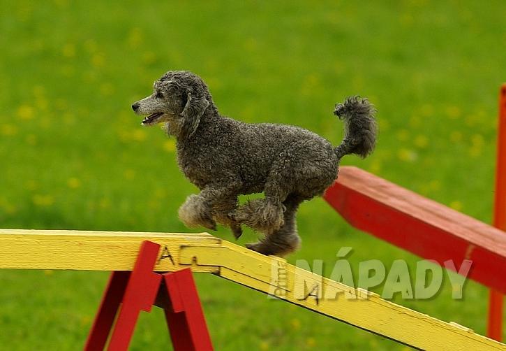 Báječný sport pro voříšky i psí šampiony 4