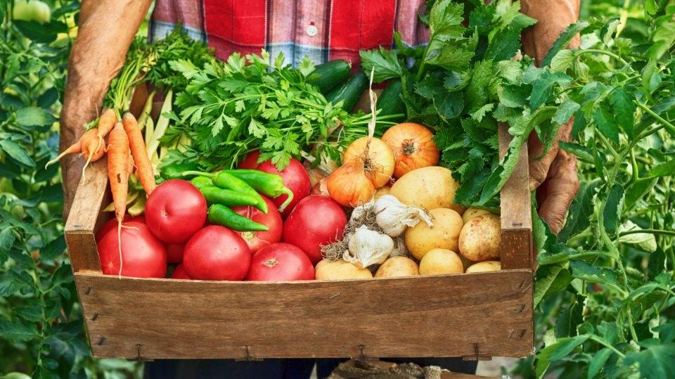 Kalendář pro zahradníky: Srpen