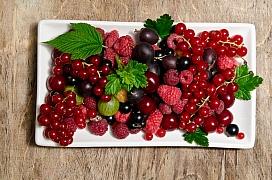 Výsadba drobného ovoce začíná