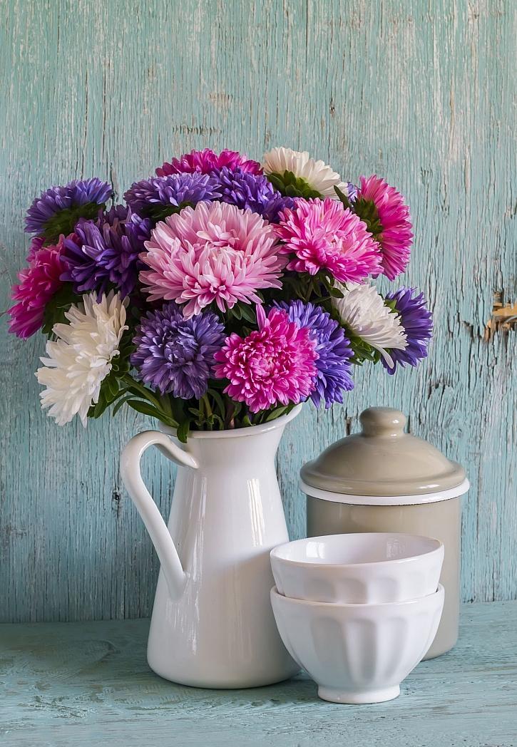 Mezi květiny vhodné k řezu patří i astry (Zdroj: Depositphotos)