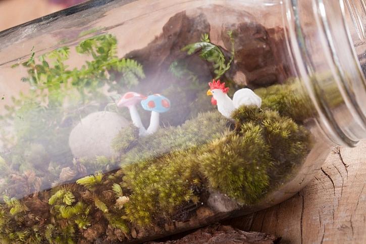Mechové terárium vytvoříte i v zavařovací sklenici