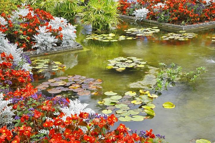 Zahradní jezírko v zimě: co s rybami a vodní zelení? (Zdroj: Depositphotos)