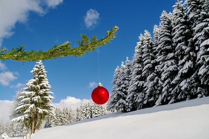 Vánoční nadílku pro lesní zvěř vybírejte s rozmyslem (Zdroj: Depositphotos)