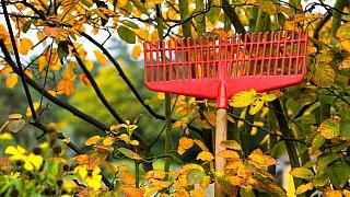 Podzimní zahrada: Co se musí udělat hned anedá se odložit na jaro