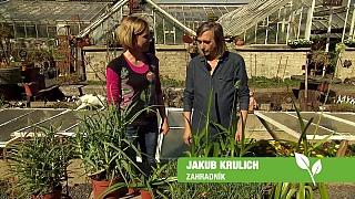 Domácí bylinková lékárna Jakub Krulich, zahradník