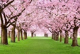 Japonská zahrada: krásná a tajemná