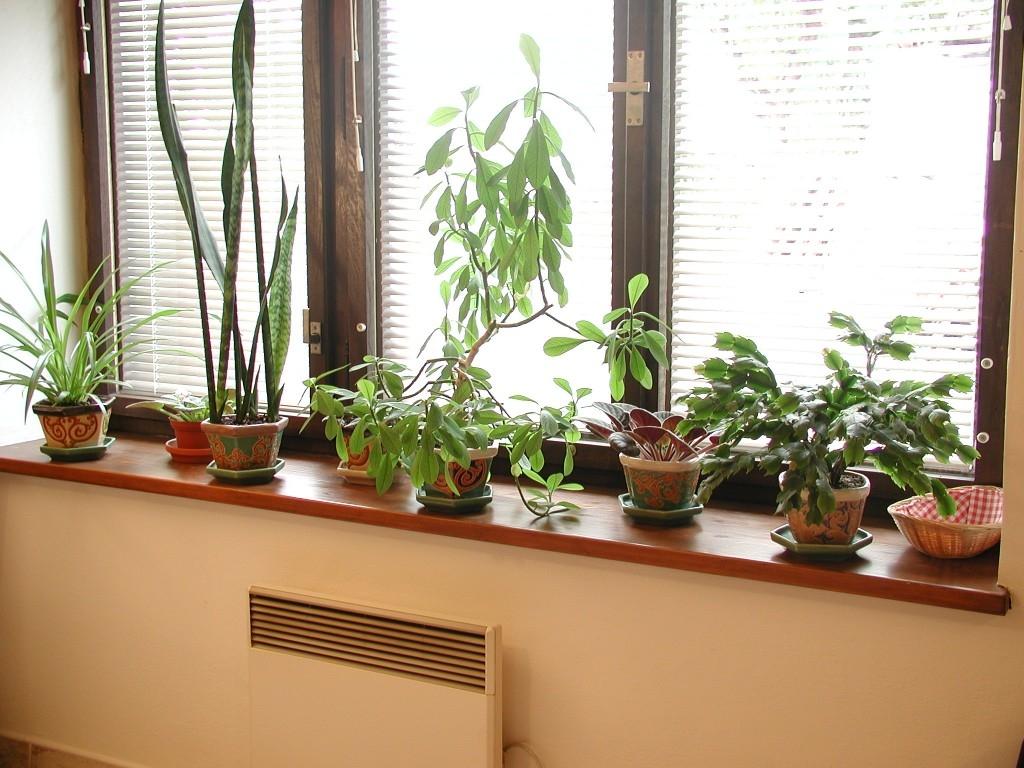 Jak na jaře pečovat o pokojové a přezimované rostliny