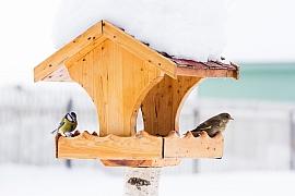 Připravte se na zimní krmení ptactva