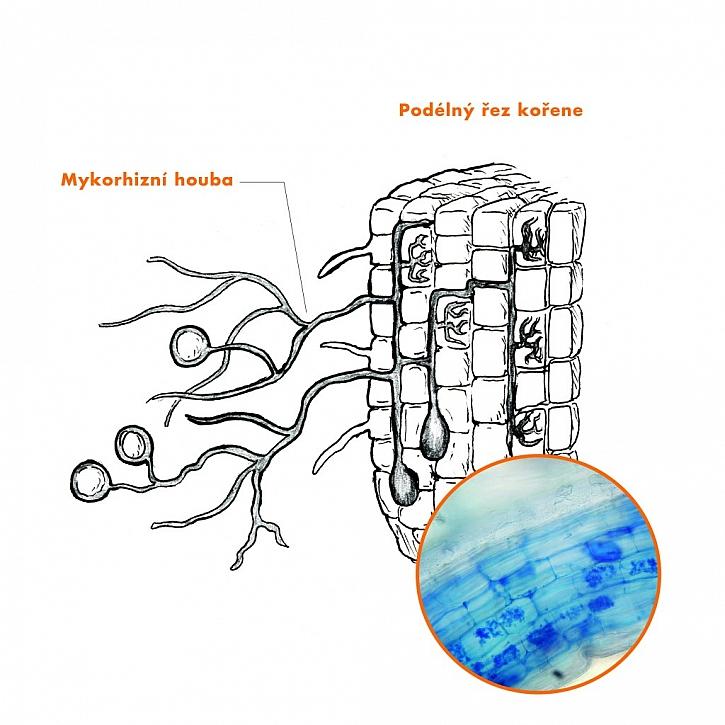 Symbiom: Mykorhizní přípravky