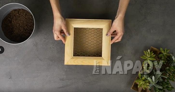 Živý obraz ze sukulentů: sololitová krabička