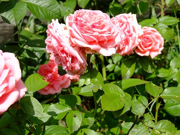 AGRO hnojivo – aprílová okrasná zahrada