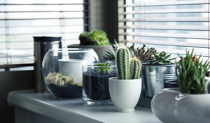 Tipy, jak pěstovat kaktusy a sukulenty (Zdroj: Hornbach)