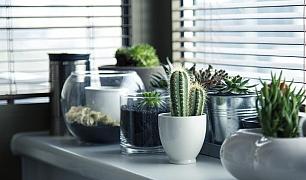 Tipy, jak pěstovat kaktusy a sukulenty