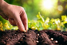 Duben ve znamení prvních výsevů do skleníku a na záhony