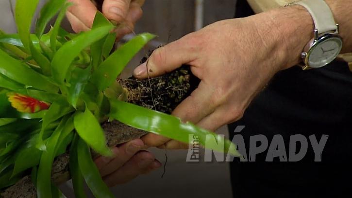 Epifyty: Rostliny můžete přichytit k podkladu drátkem