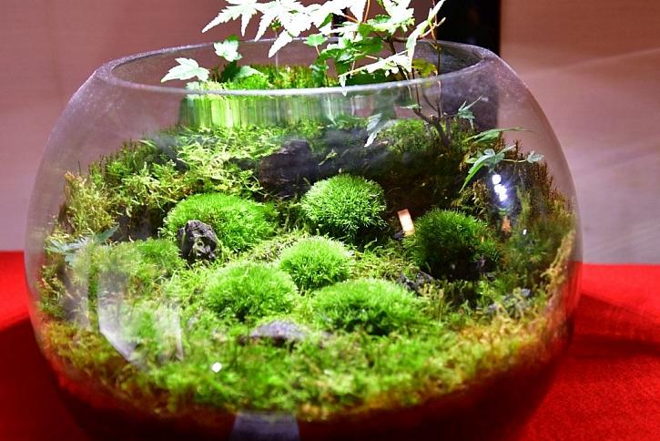 Mechové terárium vám přinese kousek lesa do bytu a nepotřebuje ani velkou péči