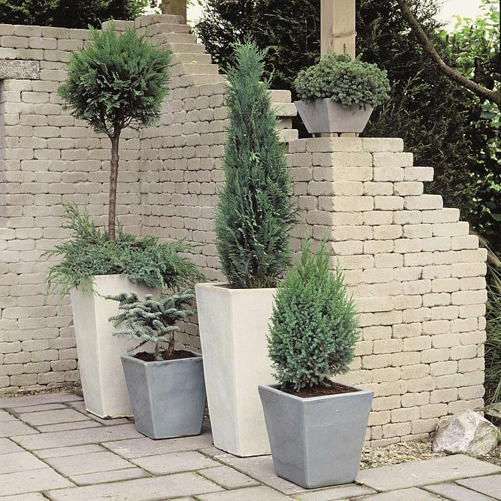 Konifery aneb jehličnany v zahradě (Zdroj: Hornbach)