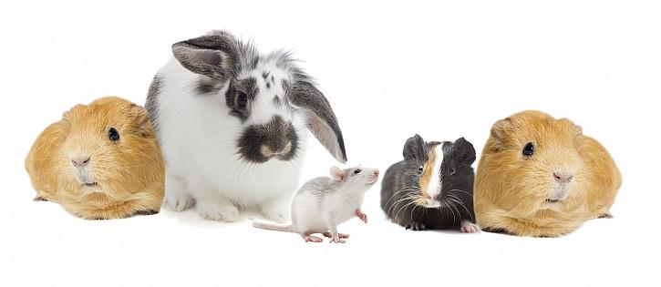 Společenství drobných domácích zvířat dokáže chovat i úplný začátečník (Zdroj: Depositphotos)