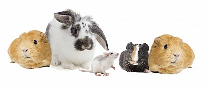 Jak chovat drobná zvířata, aby se u nás cítila spokojeně?
