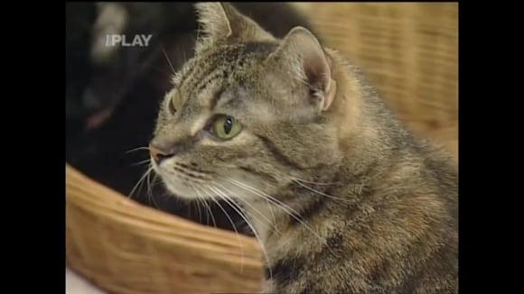 Kočky v útulku a jak o ně pečovat
