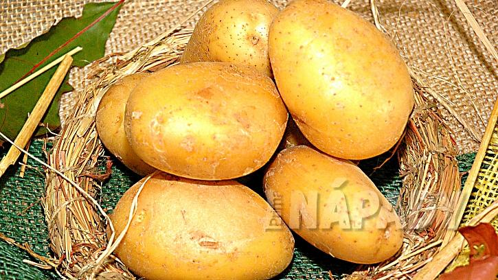 Pěstování brambor: odrůda Astoria