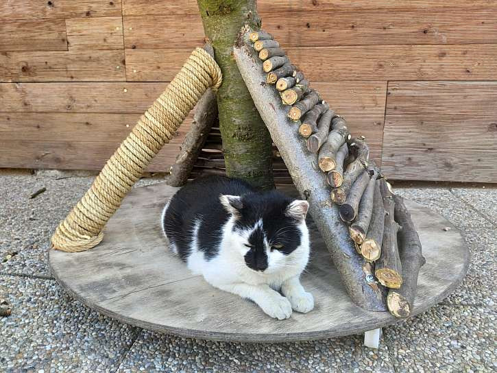 Opěry, kočka